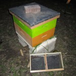 Bees installed into hive around 8:30PM.