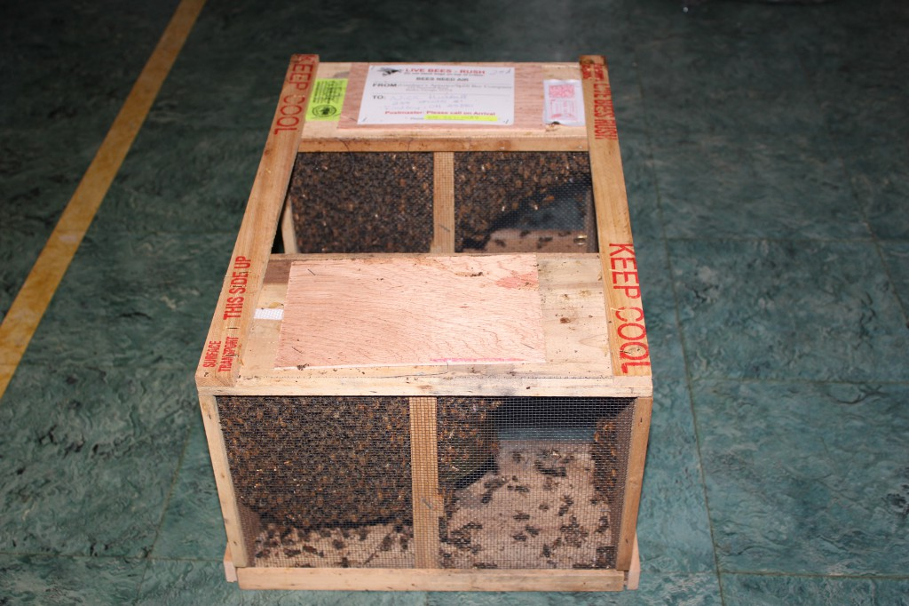 2lb Packages of Bees Sent Through the US Postal Service.